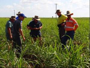 Attendees looking at the results dual herbicide technology in a Burdekin cane block